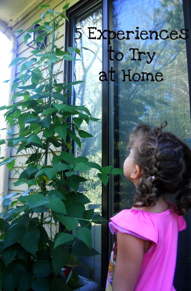 child looking at bean plant