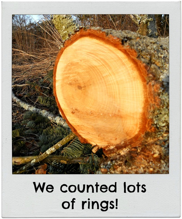 counting tree rings